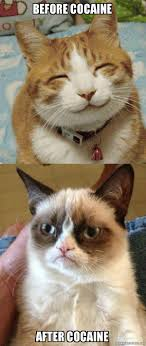 Cat Cocaine Meme - before cocaine after cocaine cocaine is hell of a drug make a meme