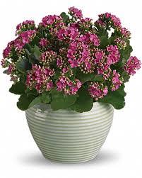 Flower Shops Inverness - barrington florist flower delivery by fresh flower market