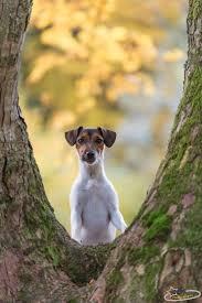 1420 best a littie bit country images on pinterest animals