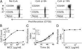 coupled il 2 u2013dependent extracellular feedbacks govern two distinct