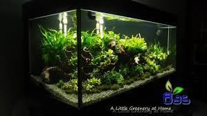 Aquascape Design Aquascape Design With Ideas Hd Images Home Mariapngt