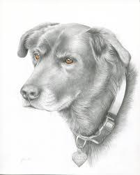 pencil drawings archives pet portraits by artist jeri allison
