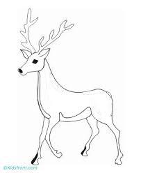 deer coloring