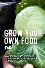 grow your own food a guide to everything you need to know to