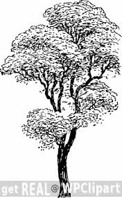 12 best tree s images on tree silhouette drawings and