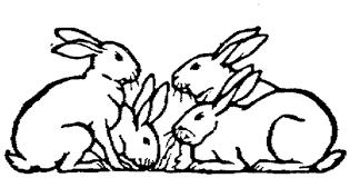 basics raising meat rabbits homestead 1 rise