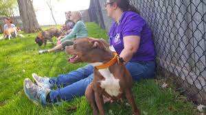 american pitbull terrier illegal prince george u0027s county high price paid for failed breed ban