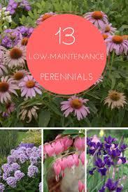 Backyard Flower Garden Ideas by Best Low Maintenance Garden Ideas On Pinterest Landscaping Plants