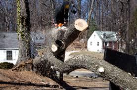 tree removal tree services stump lyons ga