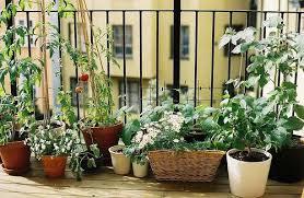 astounding inspiration apartment vegetable garden simple design
