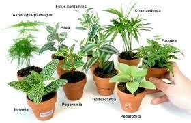 plante d駱olluante chambre plante interieur depolluante palmier nain liste de plantes