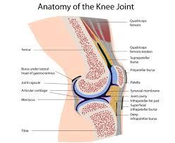 Lateral Patellar Ligament Knee Cap Internal Knee Injuries With Arthroscopic Debridement Knee