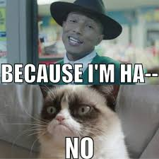 Pharrell Meme - grumpy cats answer to pharrell williams happy song meme music