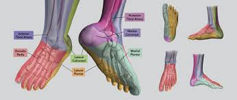 Foot Vascular Anatomy Treat Foot Ulcers With The Angiosome Concept Peripheral Intervention