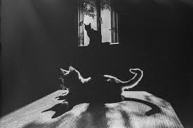 the mysterious lives of cats captured in black and white