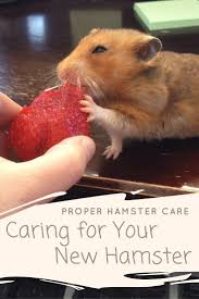 best 25 hamster supplies ideas on pinterest rat house mouse