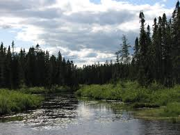 Minnesota forest images Save our sky blue waters jpg