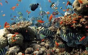 aquarium live wallpaper free download for windows xp live
