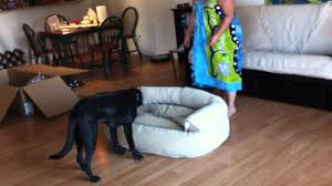 frontgate orthopedic dog couch youtube