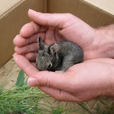 really cute baby bunnies for sale whole bunch of cuteness