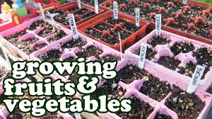 fruit and vegetable garden layout growing fruits and vegetables green vegetable seeds garden