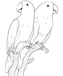 image free parrot coloring pages parrot coloring pages