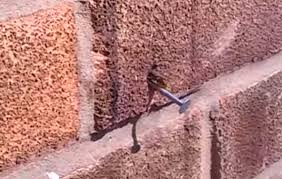 Wall Nails by Bee Pulls Nail Out Of Brick Wall Boing Boing