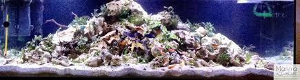 Aquascape Com Cichlid Forum U2022 Blue Yellow Melody Planted Tank