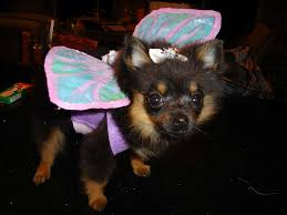 puppy fairy costume wings diy dog fairy and costumes