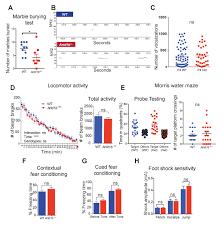 arid1b haploinsufficient mice reveal neuropsychiatric phenotypes