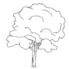 coloring pages of trees free printable fall tree coloring pages