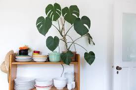 plants that grow in dark rooms stokperd hastings house