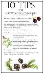 450 best gardening tips u0026 ideas images on pinterest gardening