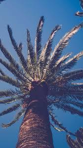 Palm Tree Wallpaper The 25 Best Palm Tree Iphone Wallpaper Ideas On Pinterest