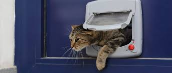 catflap in glass door how and where can you install a cat flap