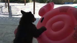 bear abc13 com
