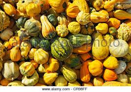 ornamental gourds stock photo royalty free image 79225211 alamy