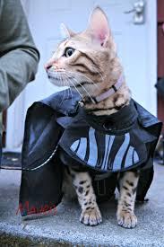 96 best pet halloween costumes images on pinterest pet costumes