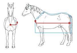 How To Measure For A Rug How To Measure A Horse For A Rug Roselawnlutheran