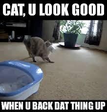 Morpheus Cat Meme - cat casino gifs search find make share gfycat gifs