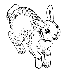 hopping bunny to color