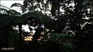 simple living in nancy woke up to a stunning sunrise at fraser u0027s
