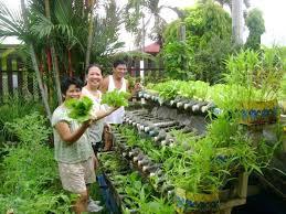 Container Vegetable Gardening Ideas Best Vegetable Garden Plants Best Vegetable Gardening Images