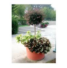 Outdoor Planters Large by Commonly Asked Questions About Large Outdoor Plantersterracast