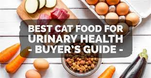 best cat food for urinary health 2017 buyer u0027s guide