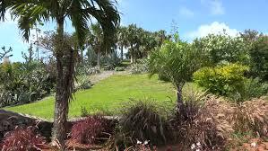 Bermuda Botanical Gardens Types Of Hamilton Botanical Gardens Bermuda Stock Footage