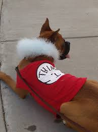 Halloween Costumes Boxer Dogs Halloween Costumes Thinking Boxer Forum Boxer