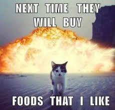 Clean Cat Memes - grumpy cat memes yuri goytacaz goytacaz lauer lindsay dillon
