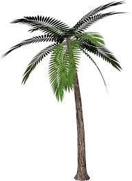 free palm tree clipart the cliparts