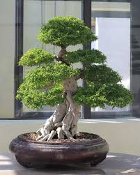 miniature plants that will beautify your home decor bonsai trees